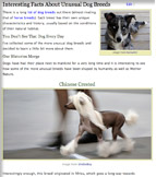 Interesting Facts About Unusual Dog Breeds