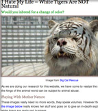 White Tigers Are Not Natural