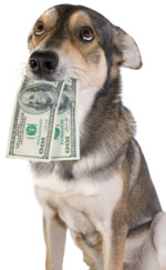 Dog with money in it's mouth